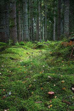 Der Weg im Wald von Heike Hultsch
