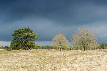 Gewitterwolken über Hoge Ginkel von Mark Bolijn