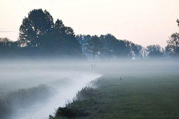 Weißer Nebel von Johanna Varner