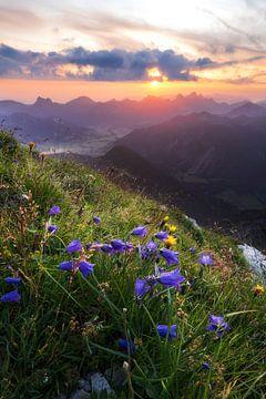 Sonnenaufgang in den Alpen mit lila Blumen und Morgenröte im Tannheimer Tal vom Gaishorn aus