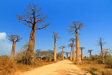 Baobab Avenue von Dennis van de Water