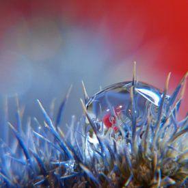 Druppel op blauwe distel van bird bee flower and tree