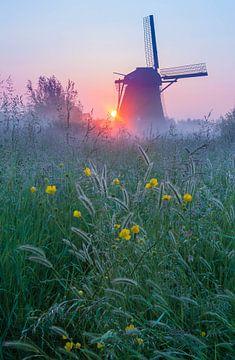 Mühle in Betuwe mit Blumen