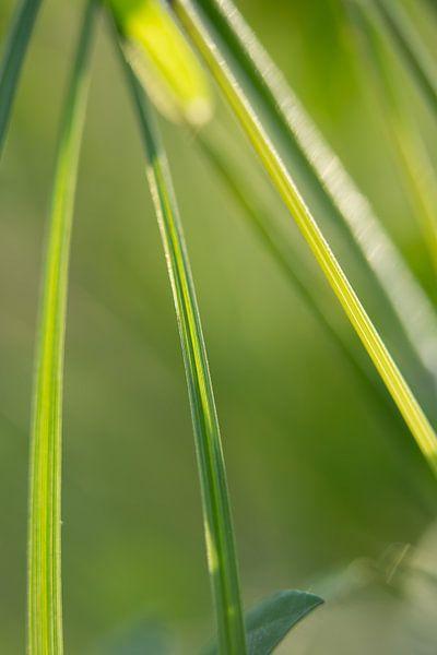 Gras van Robert Wiggers