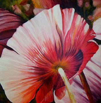 Roze papaver1 van Janny Schilderink