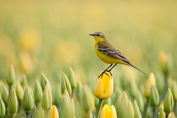 jaune à jaune sur Ina Hendriks-Schaafsma
