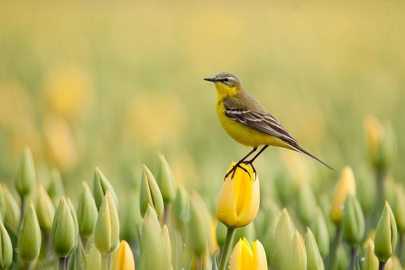 gelb bis gelb von Ina Hendriks-Schaafsma
