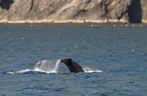 Walvis slaat met staart op het water van