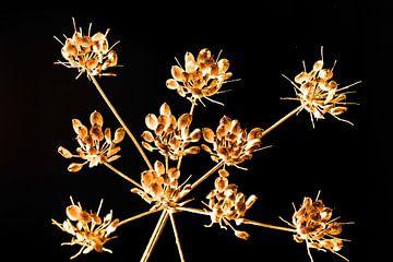 Bloemen tak van Caroline van Sambeeck