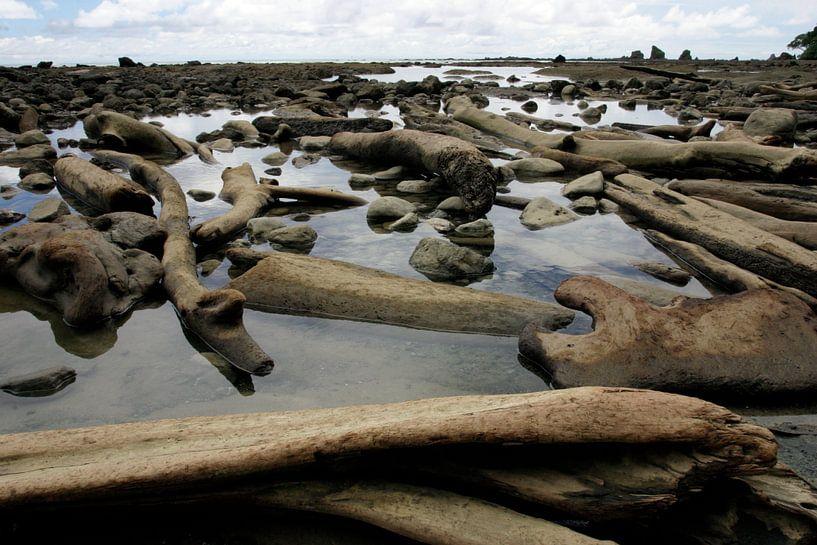 Einde van de wereld - Corcovado, Costa Rica van Peter van der Horst