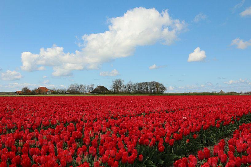 Tulpenveld in Noord-Holland van Pim van der Horst