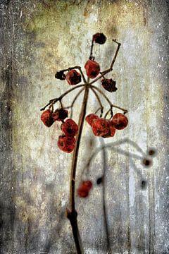 Rote Beeren - Raureif von Christine Nöhmeier