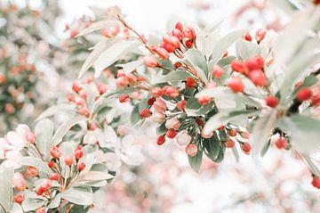 Tak met rood en roze bloesem van Dennis  Georgiev