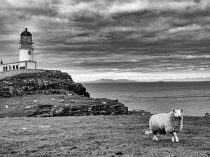 Schotland Neist Point Schaap in zwart wit