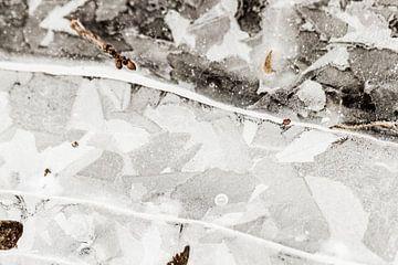 Frozen van Marieke de Boer