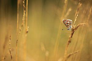 Vlinder op een stengel