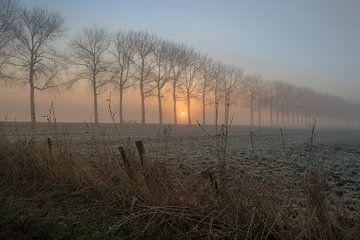 Baumreihe im Nebel von Moetwil en van Dijk - Fotografie