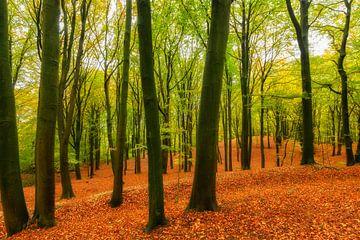 Herbstlandschaft in einem Buchenwald von Sjoerd van der Wal