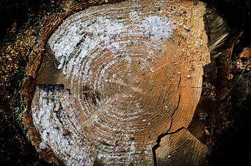 Naturgemälde - Geschnittener Baumstamm Jahresringe 6 von Nicole Schyns