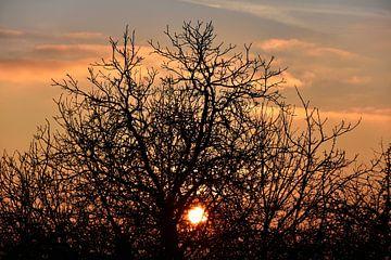Boom in de zonsondergang van Marcel Ethner