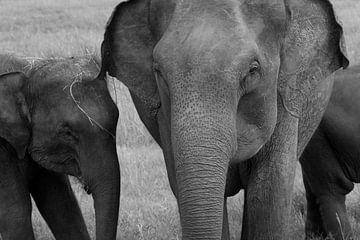 Baby olifant bij moeder