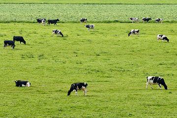 Grazende koeien van Sjoerd van der Wal