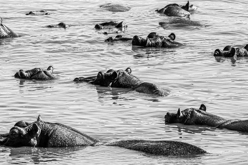 Patroon van nijlpaarden van Sharing Wildlife