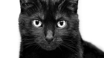 zwarte kat van Niels Hemmeryckx