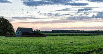 Scheune und Schafe von Emre Kanik