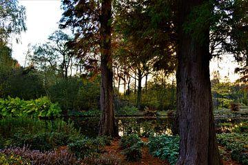 Zonsondergang in het park von Lisanne Rodenburg