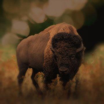 De bizon van Lucia