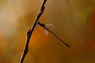 Juffer in herfstkleuren van Stefan Wiebing Photography