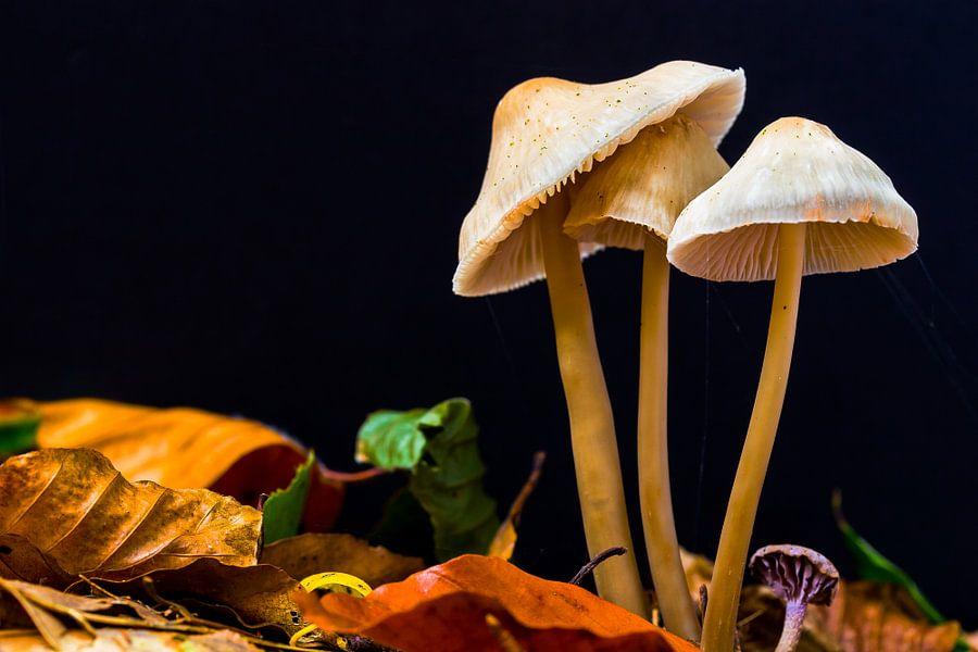 Herfst paddestoelen in bos