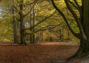 Bos in herfst-kleuren