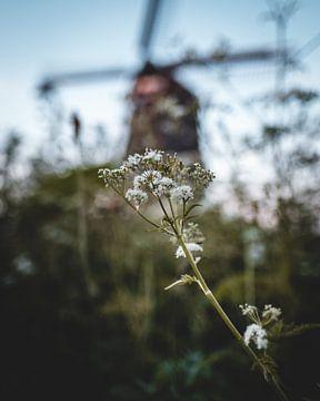 Blüte mit Mühle im Hintergrund