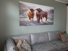 Klantfoto: Schotse Hooglanders van Karel Ton, op canvas