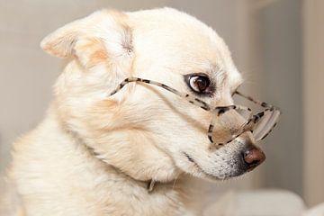 Hond met bril van Ans van Heck