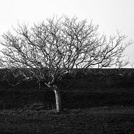 Dijk van een boom van Sonja Pixels