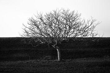 Dijk van een boom von Sonja Pixels