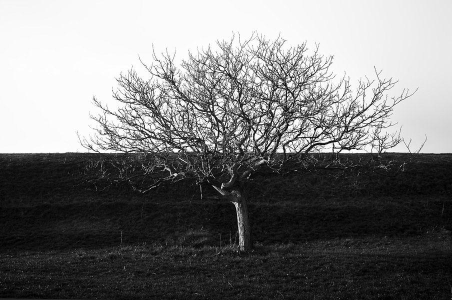 Dijk van een boom