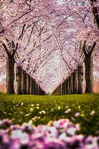 Cherry Blossom van Jeroen Diks