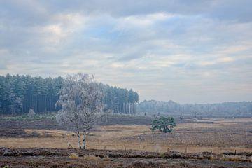 Gefrorene Landschaft von Johan Vanbockryck
