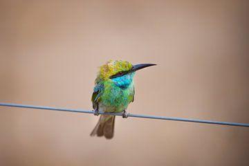 Vogeltje von Aurelia Leyba