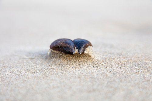 Mosselschelp op het strand