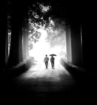 Weg ins Licht von Alexander Dorn
