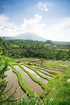 Reisfelder von Jatiluwih Bali Indonesien von Esther Mennen