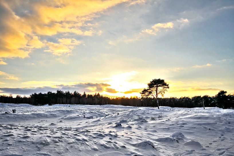 Snow Good van Cho Tang