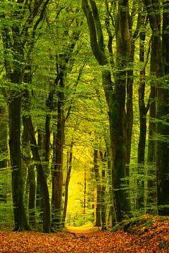 Met bladeren bedekt pad door een beukenbos van Sjoerd van der Wal