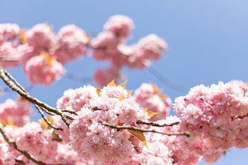Frühlingsblüte von Joy van der Valk