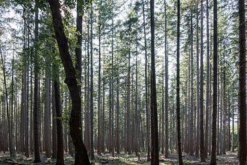 Wald mit dunklen Bäumen im Vordergrund von Idema Media